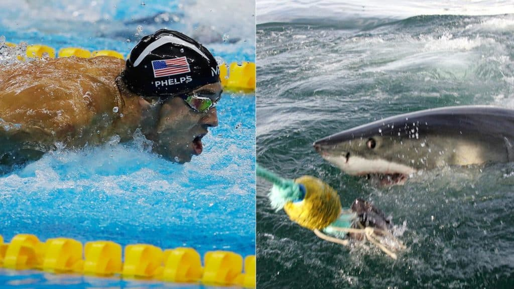 michael-phelps-vs-great-white