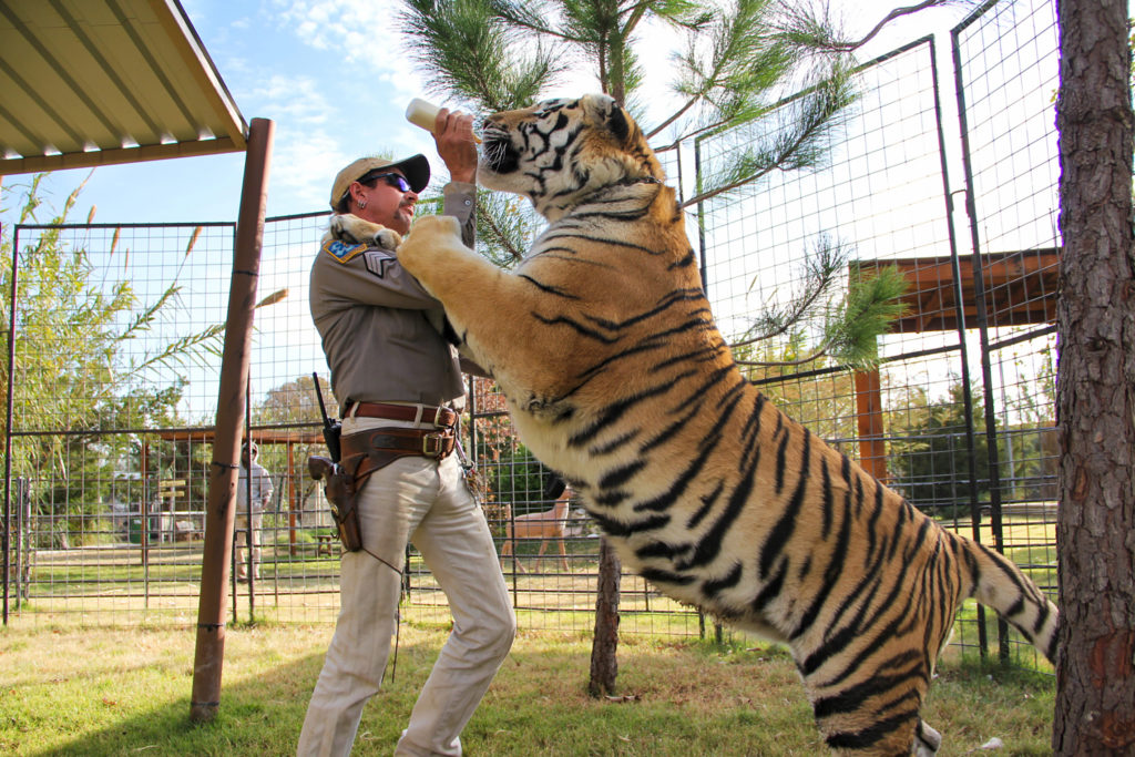 Tiger King Gambling: Real Bets You Can Make On Joe Exotic and Crew